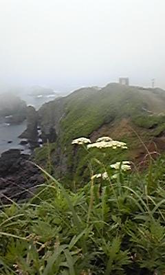 霧多布岬は今日も霧だった
